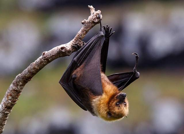 Nipah Virus Infection - Causes, Symptoms, Treatments and Preventions